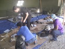Jamaica mass spaying and neutering