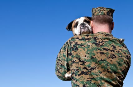 PTSD soldiers with a service dog