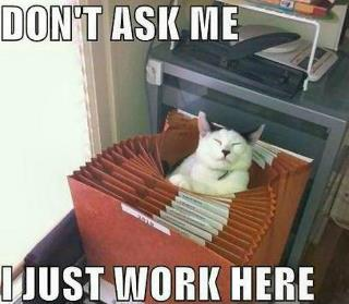 cat in workplace
