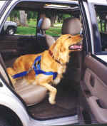 seat belts for dogs