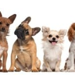 Simple Tips on Taking Care of Your Pet Dog