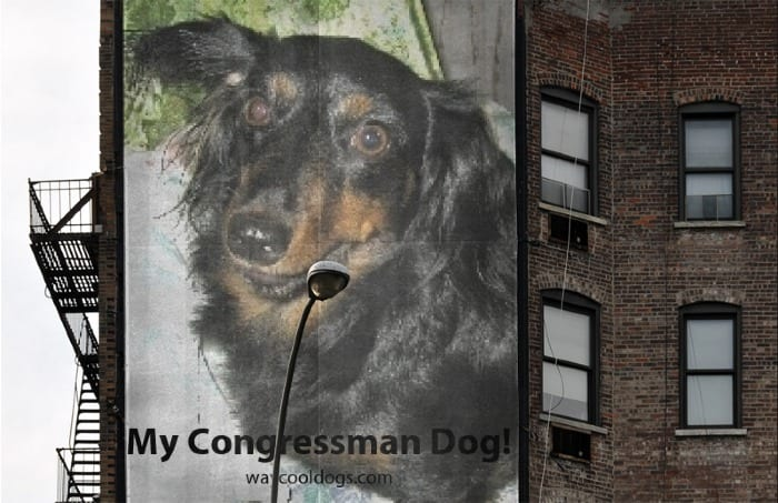 My Congressman Dog