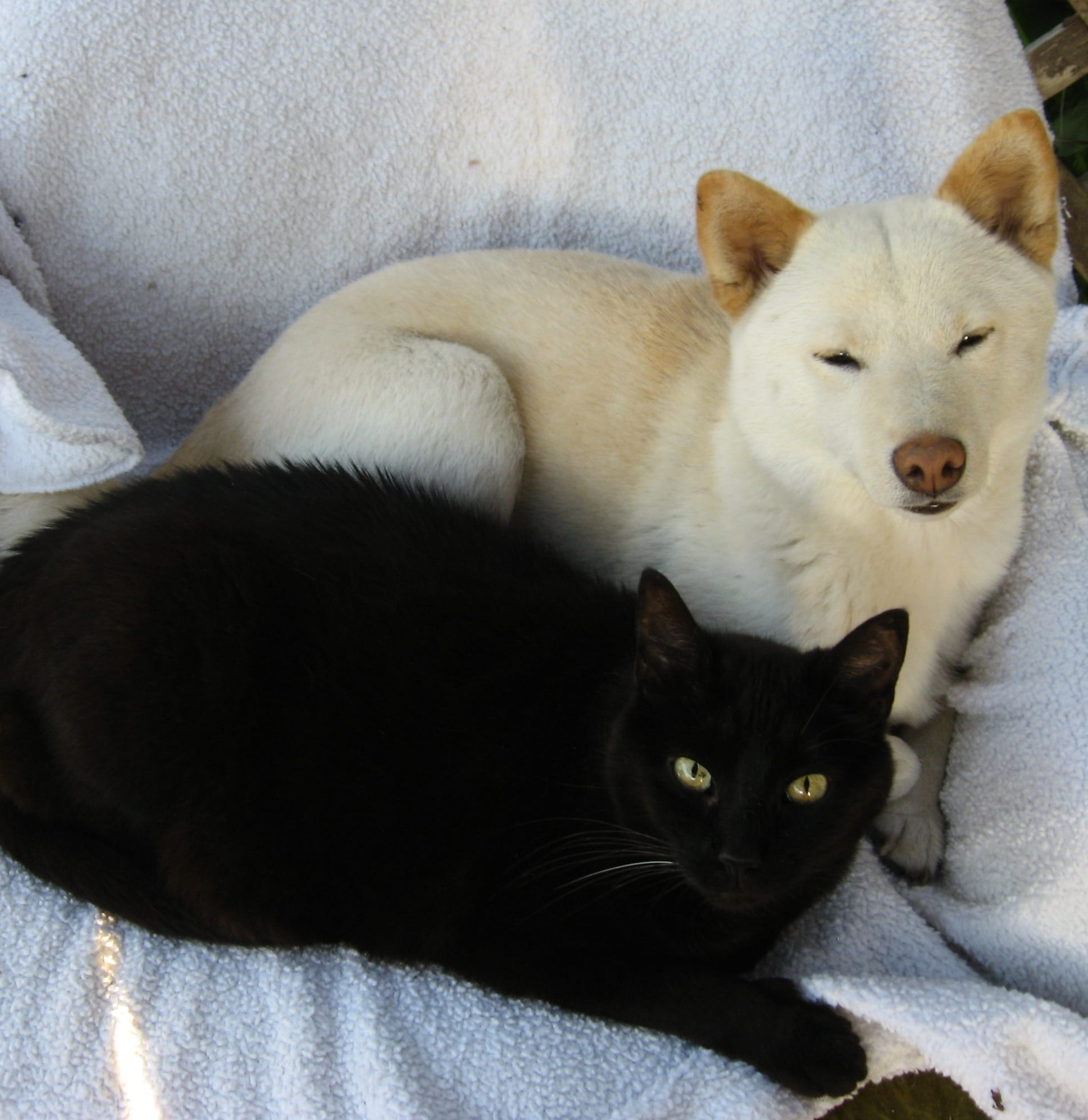 shelter cats and shelter dogs