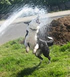 10 Tips on Hot Weather and Dogs