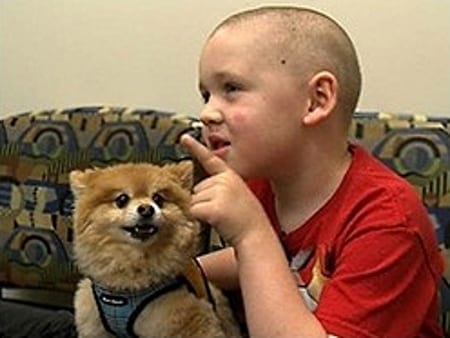 canines and childhood cancer