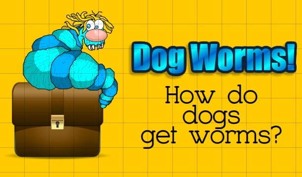 how-do-dogs-get-worms