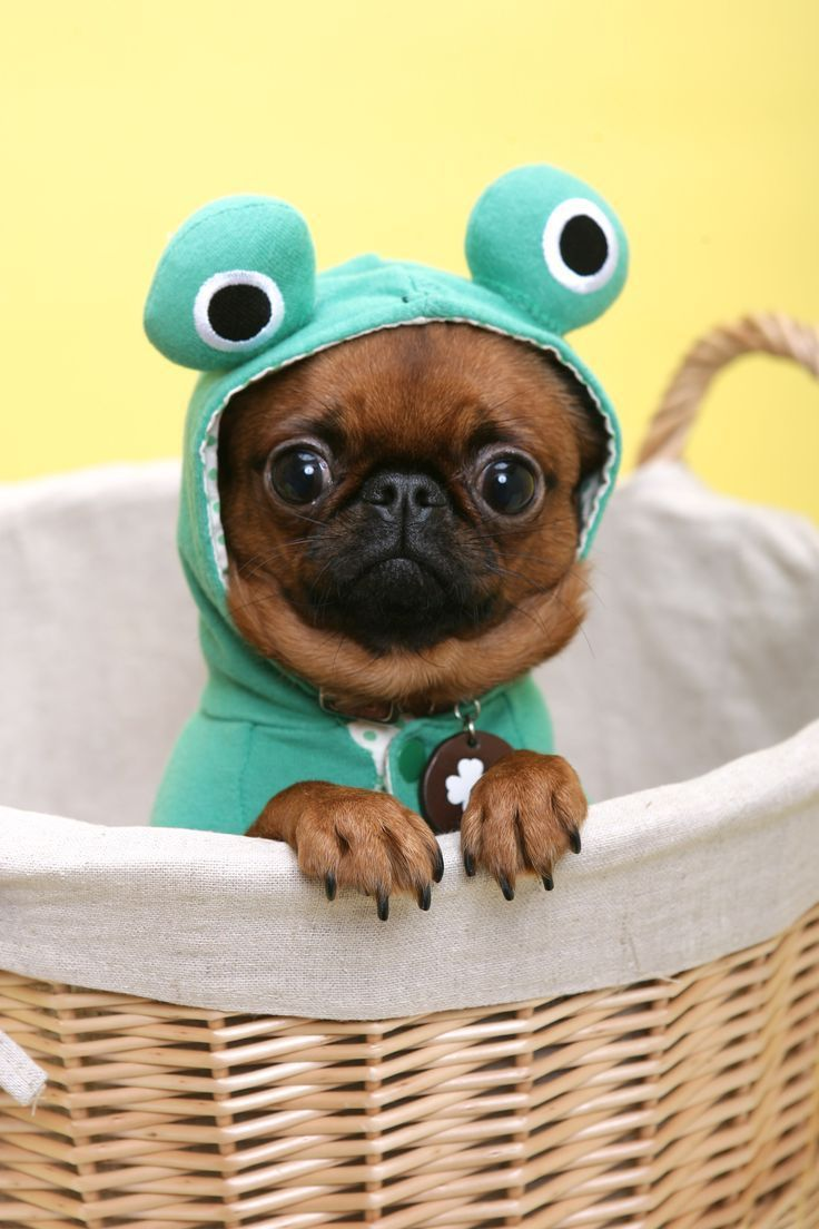 Funny Puppy Pictures