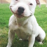 Smiling Dogs – Scientific Studies on Dogs and Emotions