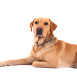 A Common Mistake Dog Owners Make – Thyroid Health