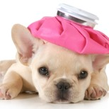 Unexpected Health Hazards for Your Dog