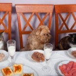 Feeding Cats and Dogs in the Same Home