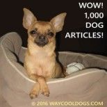 We are Celebrating 1,000 Articles on WayCoolDogs.com!