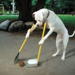 Dog Poop – the New Deal Breaker