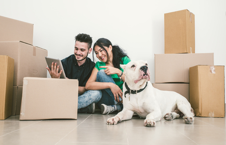 Moving house with dog