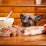 Diabetic Dogs – The Best Diabetic Dog Foods