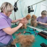 Pet Groomers | What Can You Expect?