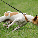 Sit-Stay Command | Training to Walk Your Dog
