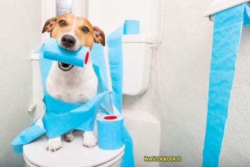 Analyzing Dog Poop---How to Determine Your Pet's Health
